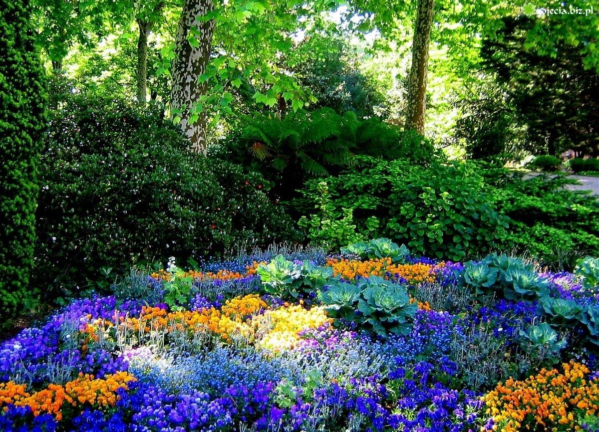 Zdjęcie Ogród, Kwiaty, Drzewa, Krzewy